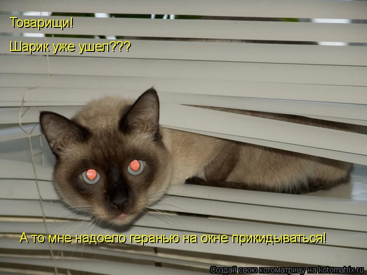 Котоматрица: Шарик уже ушел??? А то мне надоело геранью на окне прикидываться! Товарищи!