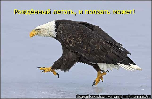 Котоматрица: Рождённый летать, и ползать может!