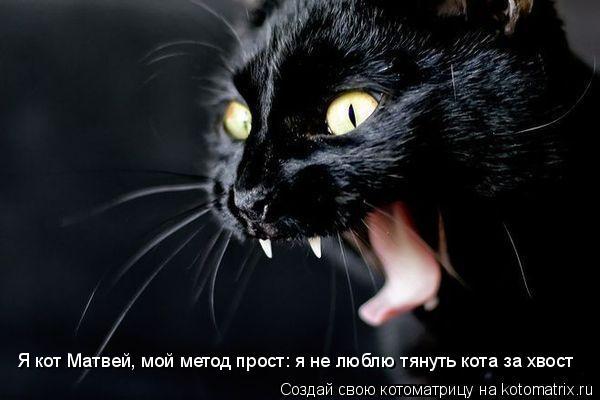 Котоматрица: Я кот Матвей, мой метод прост: я не люблю тянуть кота за хвост
