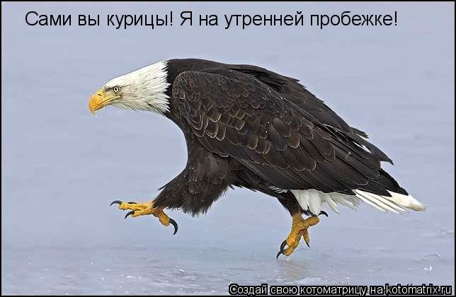 Котоматрица: Сами вы курицы! Я на утренней пробежке!
