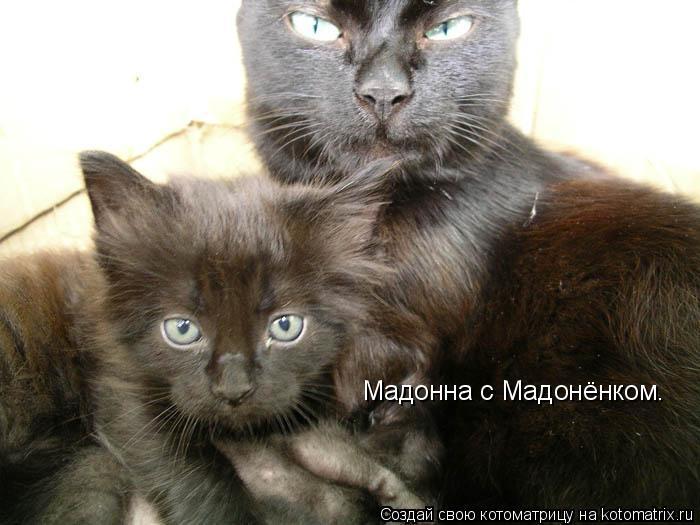 Котоматрица: Мадонна с Мадонёнком.