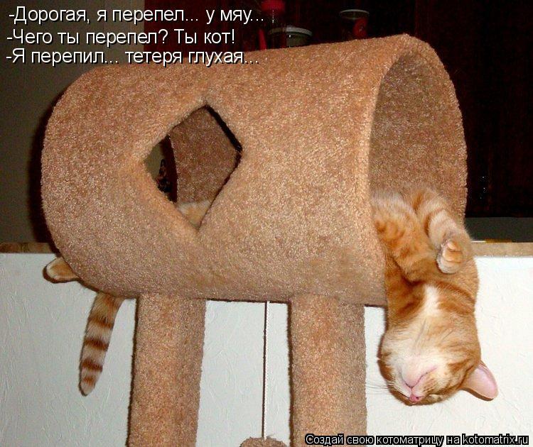 Котоматрица: -Дорогая, я перепел... у мяу... -Чего ты перепел? Ты кот! -Я перепил... тетеря глухая...