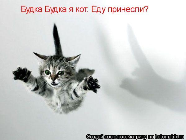 Котоматрица: Будка Будка я кот. Еду принесли?