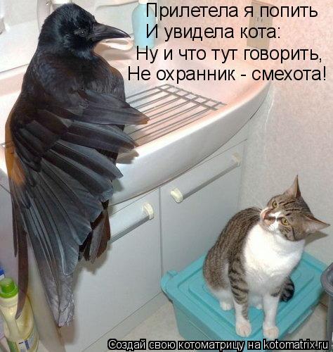 Котоматрица: Прилетела я попить И увидела кота: Ну и что тут говорить, Не охранник - смехота!