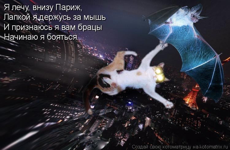 Котоматрица: Я лечу, внизу Париж, Лапкой я держусь за мышь И признаюсь я вам брацы Начинаю я бояться..