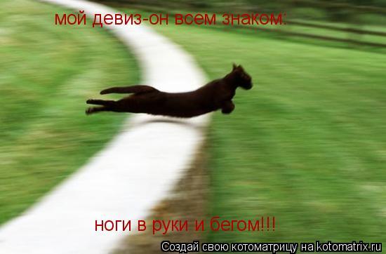 Котоматрица: мой девиз-он всем знаком: ноги в руки и бегом!!!