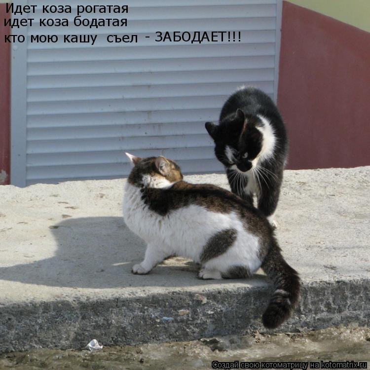 Котоматрица: Идет коза рогатая идет коза бодатая кто мою кашу  съел - ЗАБОДАЕТ!!!