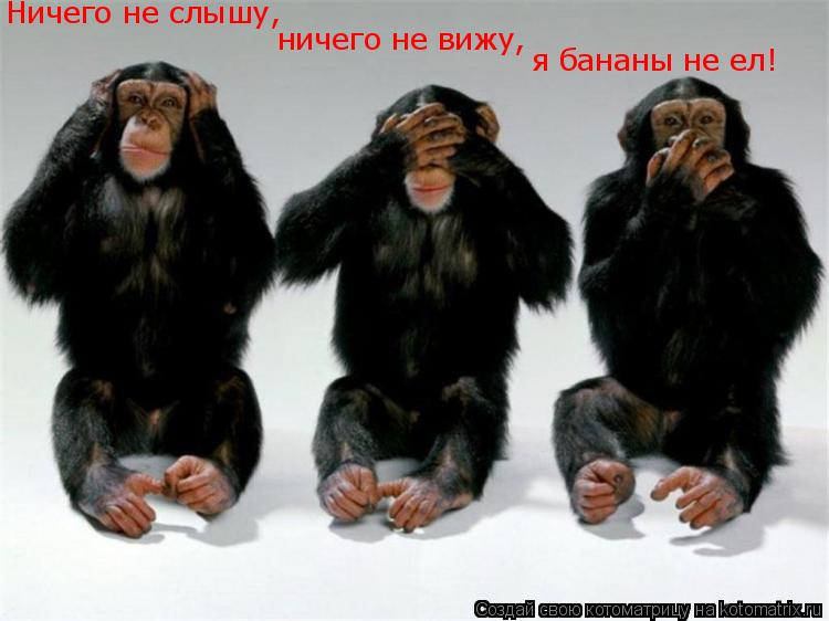 Котоматрица: Ничего не слышу,  ничего не вижу,  я бананы не ел!