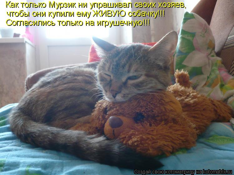 Котоматрица: Как только Мурзик ни упрашивал своих хозяев, чтобы они купили ему ЖИВУЮ собачку!!! Согласились только на игрушечную!!!