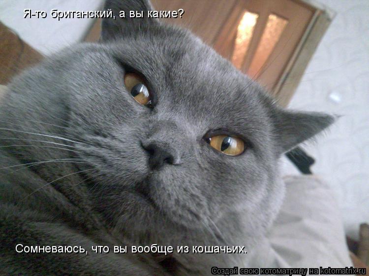 Котоматрица: Я-то британский, а вы какие? Сомневаюсь, что вы вообще из кошачьих.