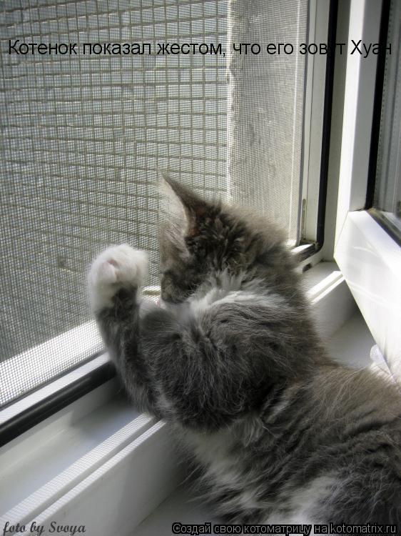Котоматрица: Котенок показал жестом, что его зовут Хуан