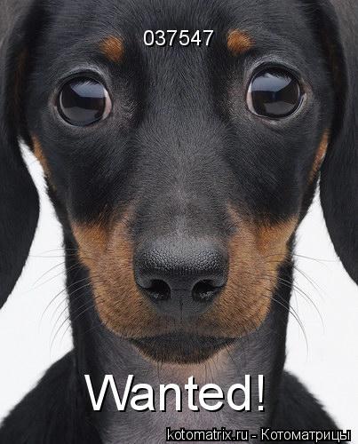Котоматрица: Wanted! 037547