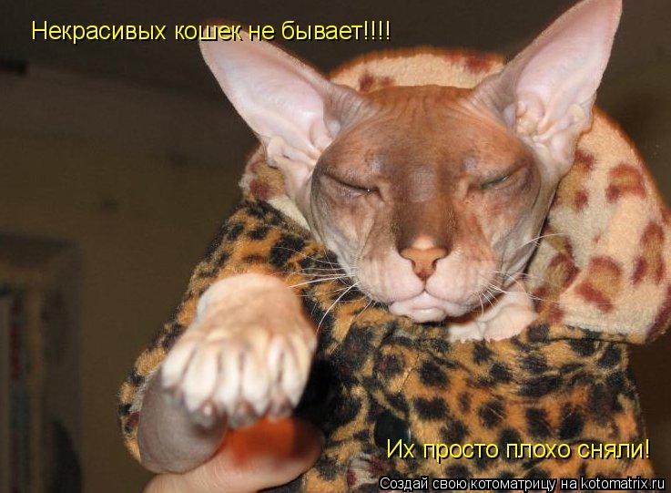 Котоматрица: Некрасивых кошек не бывает!!!! Их просто плохо сняли!