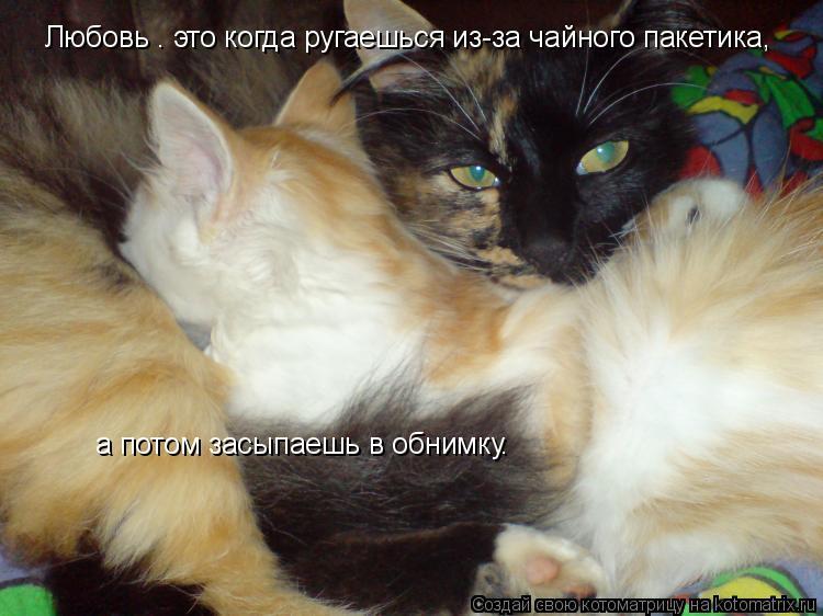 Котоматрица: Любовь – это когда ругаешься из-за чайного пакетика,   а потом засыпаешь в обнимку.