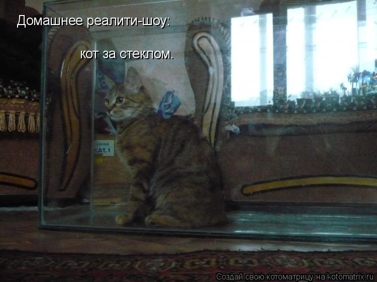 Котоматрица: Домашнее реалити-шоу: кот за стеклом.