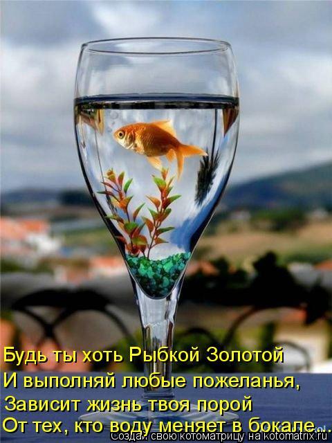 Котоматрица: Будь ты хоть Рыбкой Золотой И выполняй любые пожеланья, Зависит жизнь твоя порой От тех, кто воду меняет в бокале...
