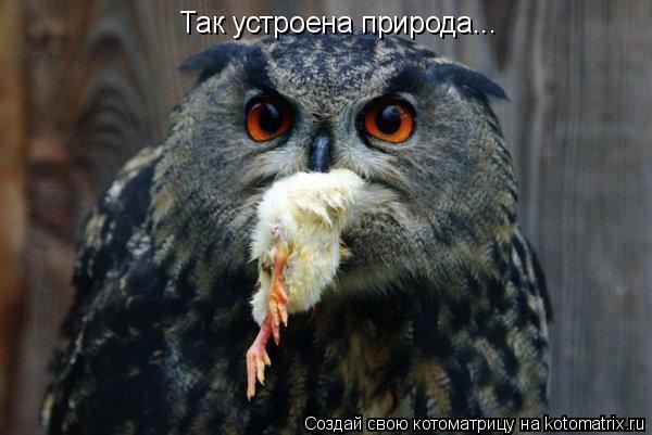 Котоматрица: Так устроена природа...