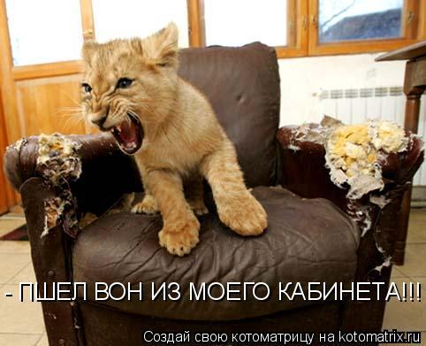 Котоматрица: - ПШЕЛ ВОН ИЗ МОЕГО КАБИНЕТА!!!