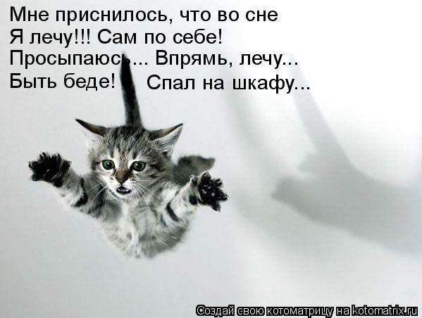 Котоматрица: Мне приснилось, что во сне Я лечу!!! Сам по себе! Просыпаюсь... Впрямь, лечу... Быть беде!      Спал на шкафу...