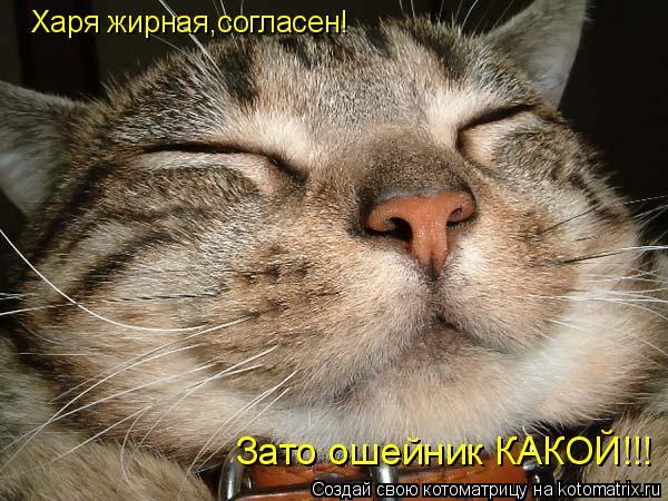 Котоматрица: Харя жирная,согласен! Зато ошейник КАКОЙ!!!