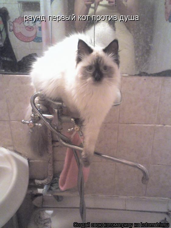 Котоматрица: раунд первый кот против душа