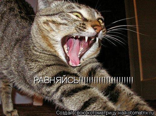 Котоматрица: РАВНЯЙСЬ!!!!!!!!!!!!!!!!!!!!!!