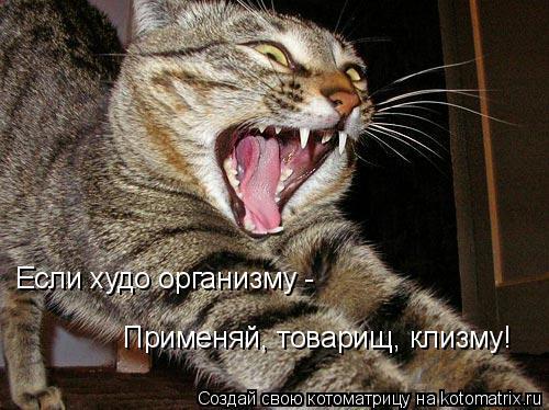 Котоматрица: Если худо организму -  Применяй, товарищ, клизму!
