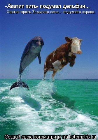 Котоматрица: -Хватит пить- подумал дельфин... -Хватит жрать Зорькино сено..- подумала корова
