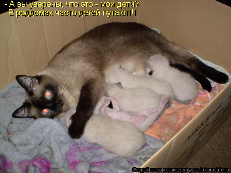 Котоматрица: - А вы уверены, что это - мои дети? В роддомах часто детей путают!!!