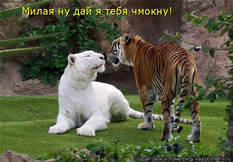 Котоматрица: Милая ну дай я тебя чмокну!