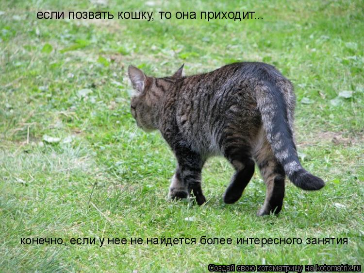 Котоматрица: если позвать кошку, то она приходит...  конечно, если у нее не найдется более интересного занятия