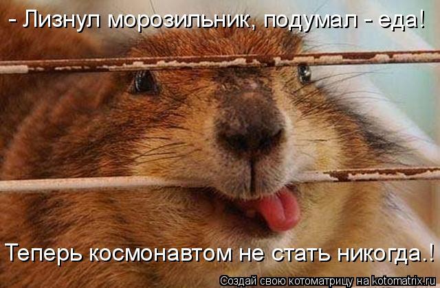 Котоматрица: - Лизнул морозильник, подумал - еда! Теперь космонавтом не стать никогда.!