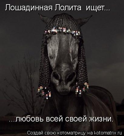 Котоматрица: Лошадинная Лолита  ищет... ...любовь всей своей жизни.