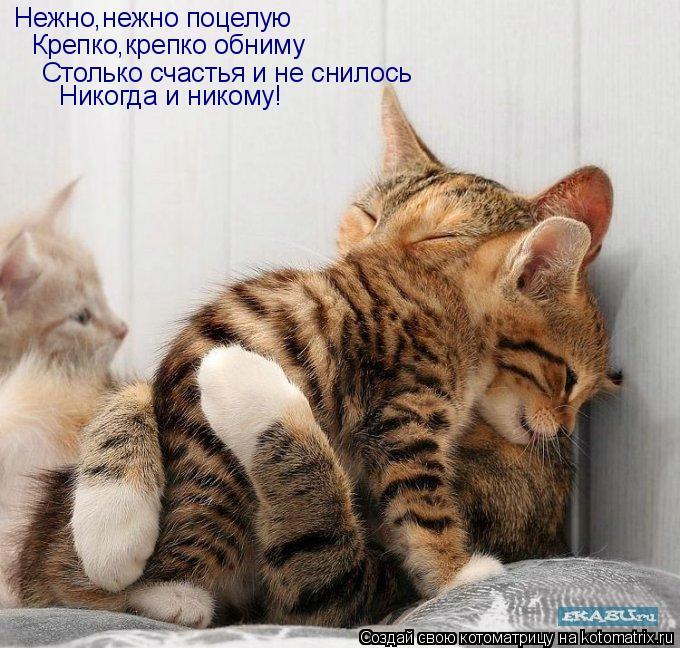 Котоматрица: Нежно,нежно поцелую Крепко,крепко обниму Столько счастья и не снилось Никогда и никому!