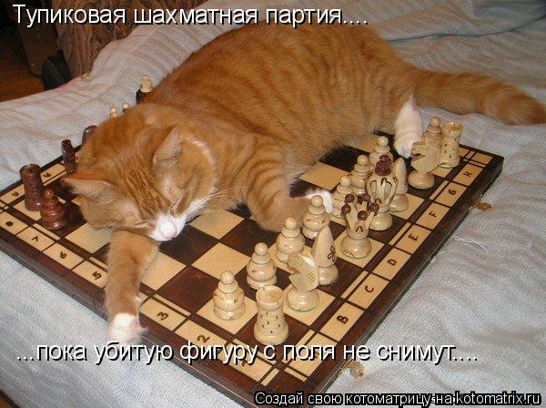 Котоматрица: Тупиковая шахматная партия.... ...пока убитую фигуру с поля не снимут....