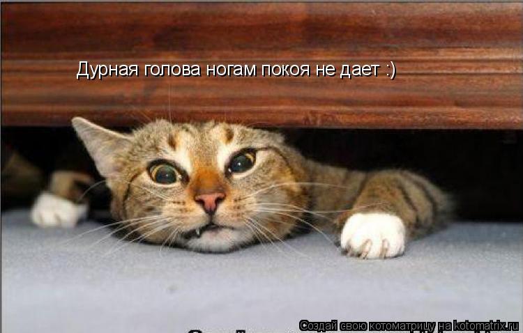 Котоматрица: Дурная голова ногам покоя не дает :)