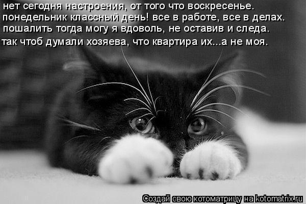 Котоматрица: пошалить тогда могу я вдоволь, не оставив и следа.  нет сегодня настроения, от того что воскресенье. так чтоб думали хозяева, что квартира их.