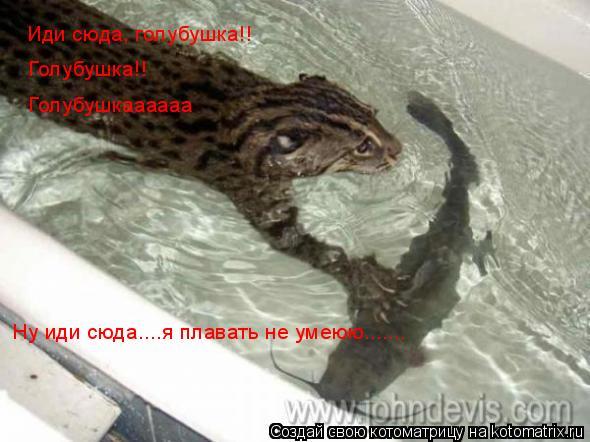Котоматрица: Иди сюда, голубушка!! Голубушка!! Голубушкаааааа Ну иди сюда....я плавать не умеюю.......