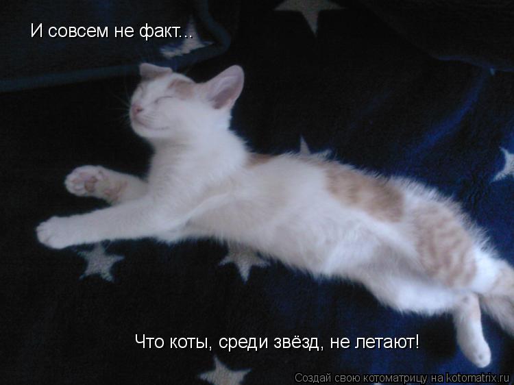 Котоматрица: И совсем не факт... Что коты, среди звёзд, не летают!
