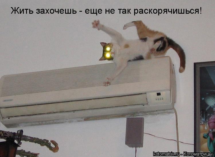 Котоматрица: Жить захочешь - еще не так раскорячишься!