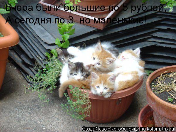 Котоматрица: Вчера были большие по 5 рублей, А сегодня по 3, но маленькие!
