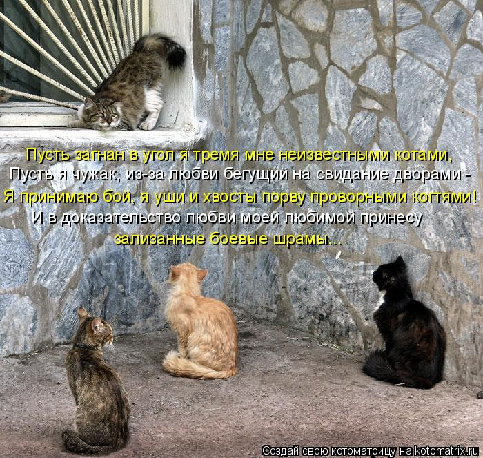Котоматрица: Пусть загнан в угол я тремя мне неизвестными котами, Пусть я чужак, из-за любви бегущий на свидание дворами - Я принимаю бой, я уши и хвосты по