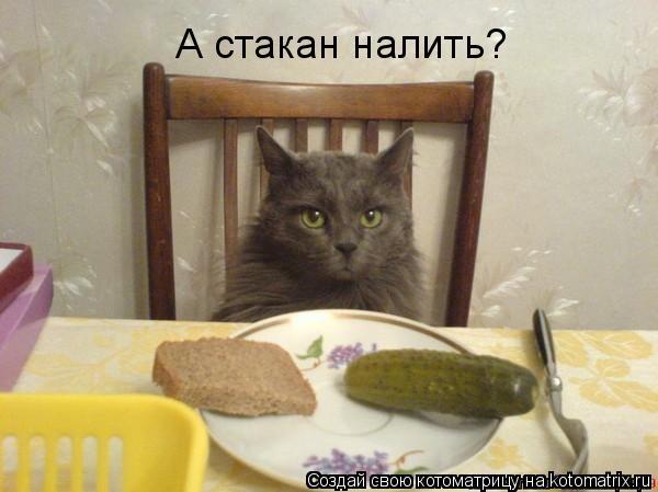 Котоматрица: А стакан налить?