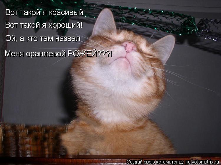 Котоматрица: Вот такой я красивый Вот такой я хороший! Эй, а кто там назвал Меня оранжевой РОЖЕЙ???!