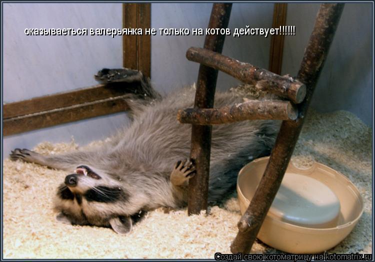 Котоматрица: оказываеться валерьянка не только на котов действует!!!!!!