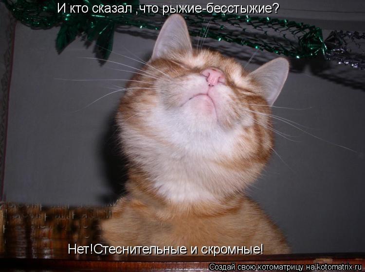 Котоматрица: И кто сказал ,что рыжие-бесстыжие? Нет!Стеснительные и скромные!