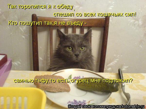 Котоматрица: Так торопился я к обеду , спешил со всех кошачьих сил! Кто пошутил так,я не въеду - свинью,тьфу,то есть,огурец мне подложил?