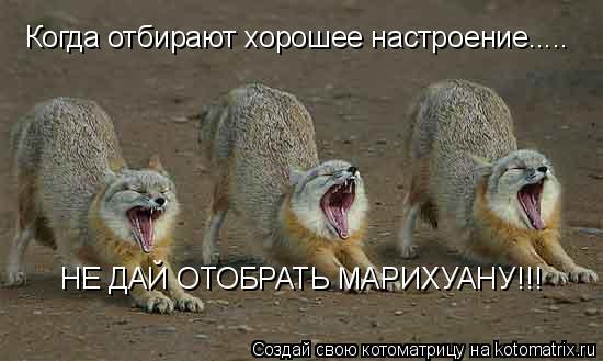 Котоматрица: Когда отбирают хорошее настроение..... НЕ ДАЙ ОТОБРАТЬ МАРИХУАНУ!!!