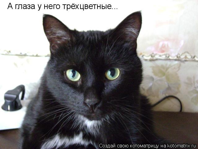 Котоматрица: А глаза у него трёхцветные...