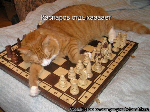 Котоматрица: Каспаров отдыхаааает